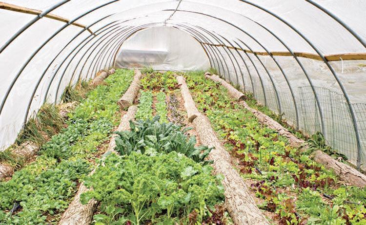 240 میلیارد ریال سرمایه گذاری در بخش کشاورزی سراوان
